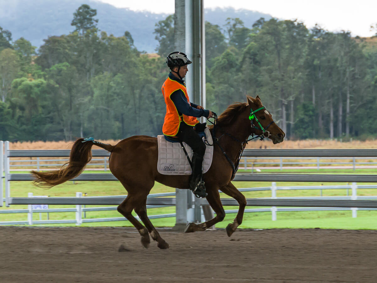 Endurance riders go the distance in Imbil this weekend